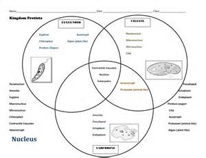 4 best images of diagram autotrophs venn heterotrophs
