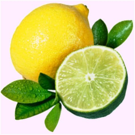 which is better lemon or lime cultural reciprocity tip lemons limes