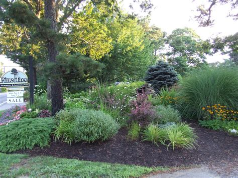 Landscape Design Pine Trees Photos Pine Tree Nursery And Landscaping
