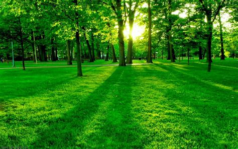 green wallpaper for eye relaxation all wallpapers eye soothing natural green wallpaper