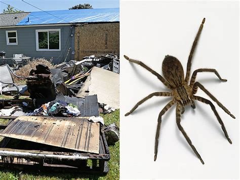 kill spiders in house man uses blowtorch to kill spider sets house on fire
