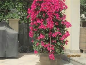 outdoor plants 171 desertfragrance com