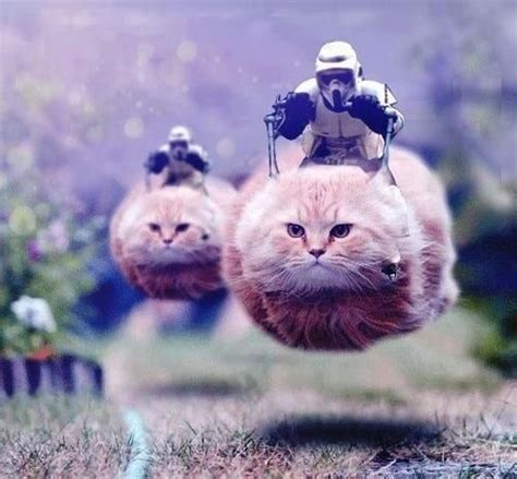 Star Wars Cat Meme - star wars cat meme slapcaption com animals pinterest