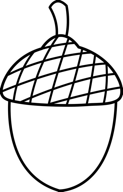 Acorn Drawing Outline by Acorn Cliparts