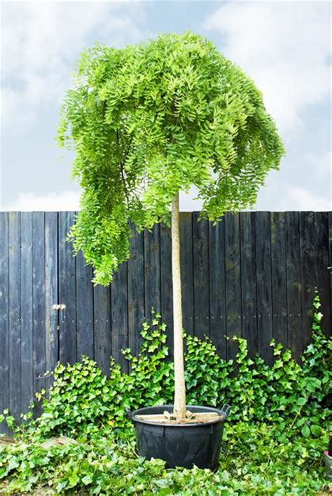 praxis tuin slang boom in pot schaduw flexibele slang afzuigkap praxis