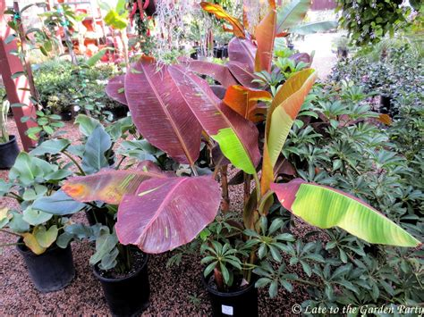 tropical plants san diego late to the garden nursery hopping in san diego county