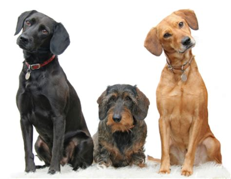 three dogs show some emotion association of pet behaviour counsellors