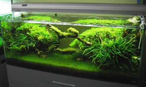 best low light aquarium plants low light aquascape by tom barr aquascapes pinterest