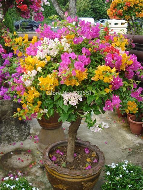 original high quality pcs mix color bougainvillea