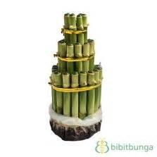 Bambu Rejeki Pagoda 3 Tingkat tanaman florida bibitbunga