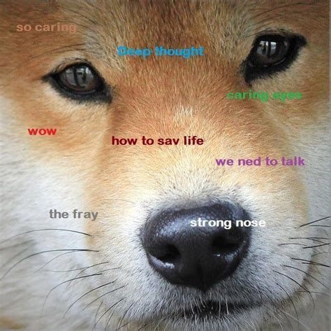 Shibe Meme - the best of the hilarious shibe meme