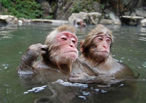 Monkey In Bathtub by Monkey Bath Flickr Photo