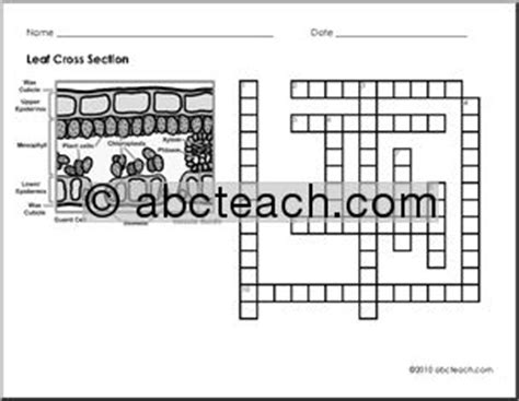 Section Crossword Clue by Crossword Leaf Cross Section Vocabulary Abcteach