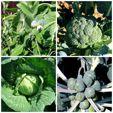 Early Spring Garden Projects The Gardening Cook Early Garden Vegetables