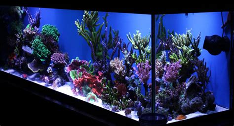 Aquascape Setup Tank Profile Brian Babcock S Sps Dominated Reef