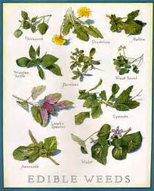 a huge list of edible plants and weeds for survival