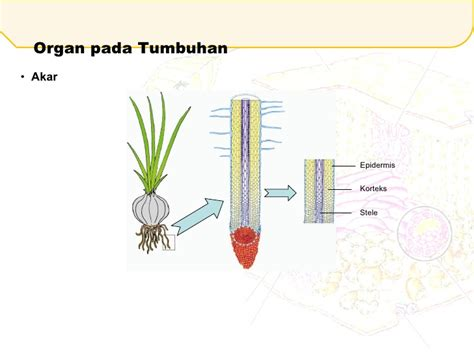 Tali Tambang Goni Besar 2 1 jaringan tumbuhan