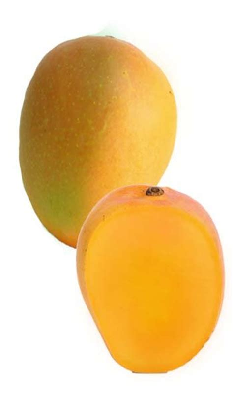 Sweet Manggo By Hansen Essence Hansen Flavor mango tree orange essence designer variety grafted