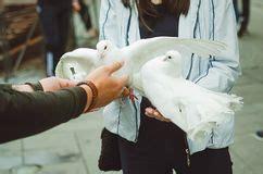 doves holding wedding rings stock vector illustration  happiness banner