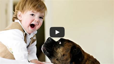 babies laughing at dogs babies laughing hysterically at dogs compilation 2015