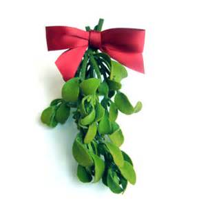 why do we hang mistletoe science for life sm