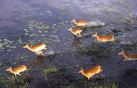 Okavango Delta ? Travel Guide, Map & More!