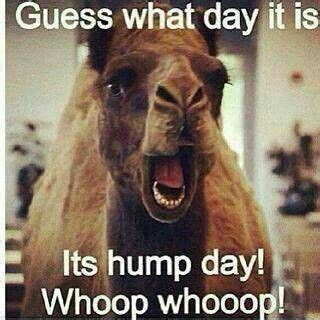 geico hump day camel commercial happier than a youtube the quot hump day quot commercials from geico get me every time