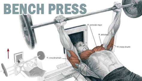 upper back pain after bench press 14 best images about chest workouts on pinterest