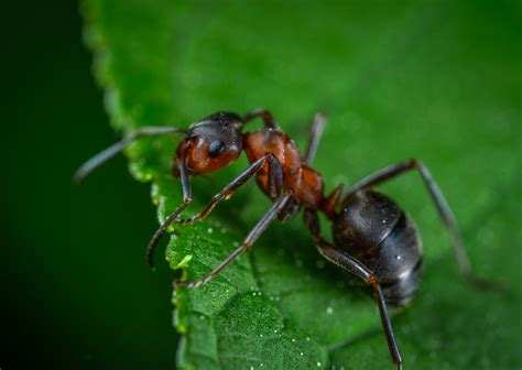 eliminare formiche giardino come eliminare le formiche dal giardino