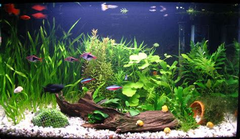 decoracion acuario decoraci 243 n para acuarios im 225 genes y consejos