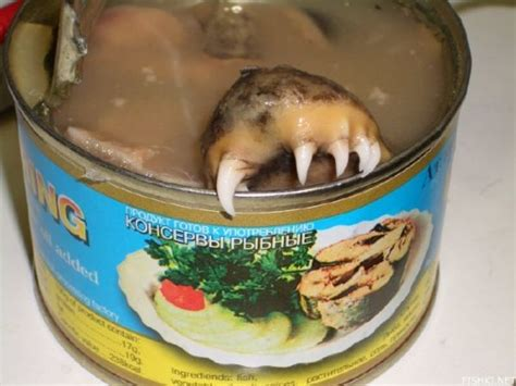 canned food walmart ten of the most disgusting canned food products neatorama