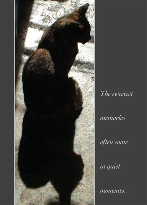 karuna cards creative ideas to transform grief and difficult transitions books animal sympathy cards from bernadette e kazmarski