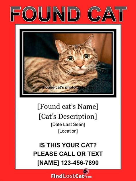 lost cat flyer poster templates free downloads
