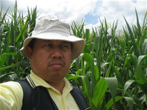 Benih Jagung Manis Malaysia anim agro technology jagung