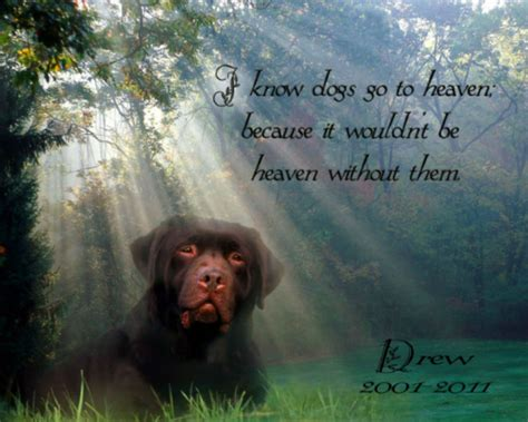 dogs in heaven quotes about dogs in heaven 31 quotes