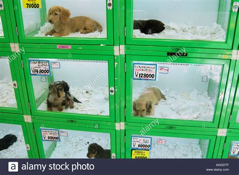 puppies for sale store pet store with puppies for sale shinjuku tokyo japan stock photo royalty free
