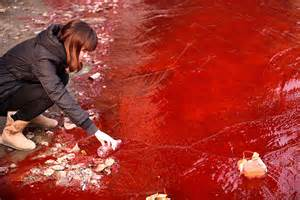 Dead pigs and rivers of blood shocking photos of water pollution in