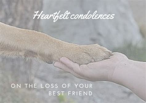 pet loss sympathy card template condolence template 16 best and condolence images