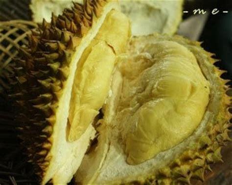 Harga Bibit Durian Terong cara menanam pohon durian cara menanam tanaman