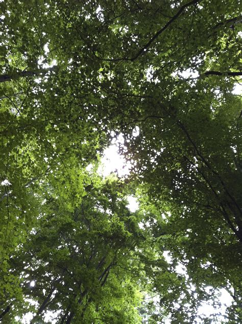 What Is A Tree Canopy Tree Canopy Everyday Epistle By Aimee Whetstine