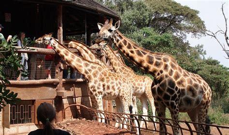 5 Safari Stuff To See by Things To Do And See In Nairobi Kenya Safari Travel