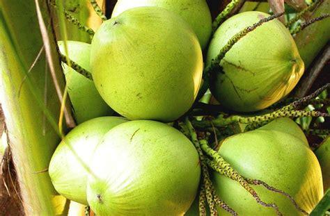 Minyak Ikan Untuk Menambah Berat Badan ct healing minyak kelapa dara dan penurunan berat