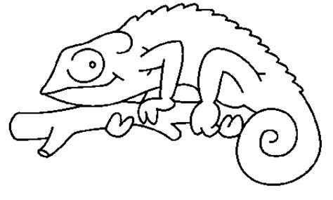 chameleon template chameleons coloring pages