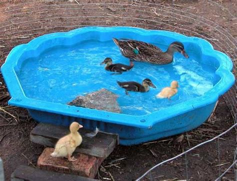 andy vardy backyard poultry 84 best chicken coops and duck houses images on pinterest