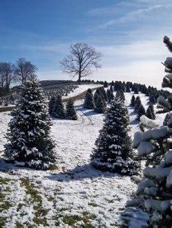 myrtle beach christmas tree farm trees trees and on