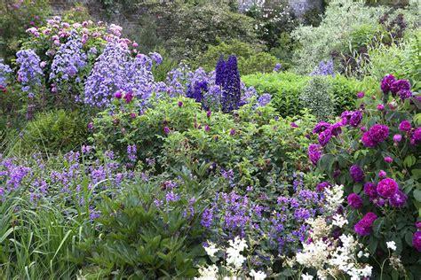 blauwe regen weinig bloemen borderpakket engelse rozen 2 m 178 directplant