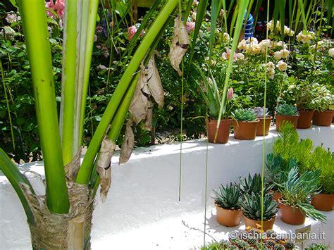negombo ischia costo ingresso ischia green ipomea mostra mercato di piante al