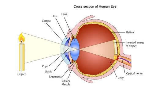 what does cross section mean what does my eyeglass prescription mean dr farah lakhani