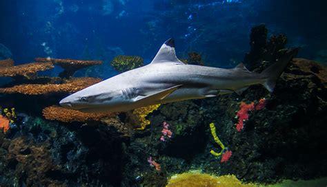 zoologischer garten berlin aquarium zoo berlin herzlich willkommen im zoo berlin die haie