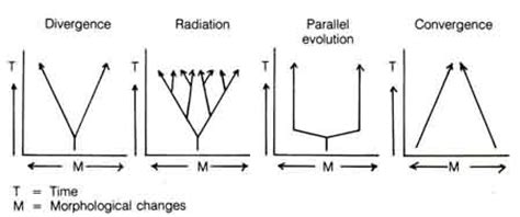 pattern component theory of evolution pun 1 5 htm